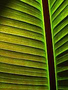 Single Green Palm Leaf