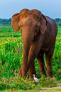 Sri Lanka-Udawalawe National Park