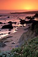 Single lone Elephant Seal sleeping on sand beach at sunset, Piedras Blancas, near San Simeon, California