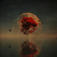This is a scene that feels as though it is speaking to us from our dreams. This is certainly not the kind of scene you would run across on a normal day. This is certainly not the kind of scene you would run across on this planet! A red maple tree stands surrounded by water. A moon that can be only be described as deep and simply massive hangs overhead. Two birds are flying around the tree, but it seems unlikely that they are going to be much help. Are you on your own? Available as t-shirts, wall art, or interior home décor products. <br /> <br /> BUY THIS PRINT AT<br /> <br /> FINE ART AMERICA<br /> ENGLISH<br /> https://janke.pixels.com/featured/surrealistic-landscape-with-red-mapple-and-full-moon-jan-keteleer.html<br /> <br /> WADM / OH MY PRINTS<br /> DUTCH / FRENCH / GERMAN<br /> https://www.werkaandemuur.nl/nl/shopwerk/Droomlandschap---Droomlandschap-met-rode-boom-en-volle-maan/434762/134