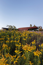 Yellow flowers in fall at Trinity River Audubon Center, Great Trinity Forest, Dallas, Texas, USA