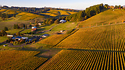 Saffron Fields Vineayrd fall colros drone aerial , yamhill-Caflon AVA, Waillamette Valley, Oregon