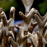 Handmade walking sticks with rugged  antlers handles.<br />
