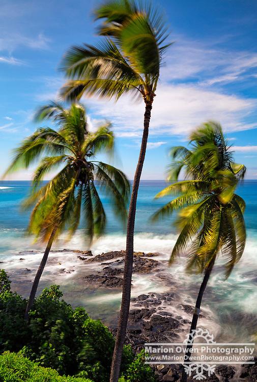 Long exposure of surf and wind blowing through palm trees, Big Island, Hawai'i, Kona