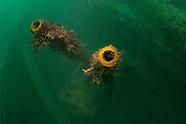 Diving Scapa Flow Scotland