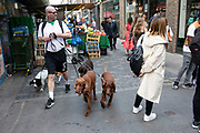 Dog walker with five dogs of many different breeds on Berwick Street in Soho, London, England, United Kingdom.