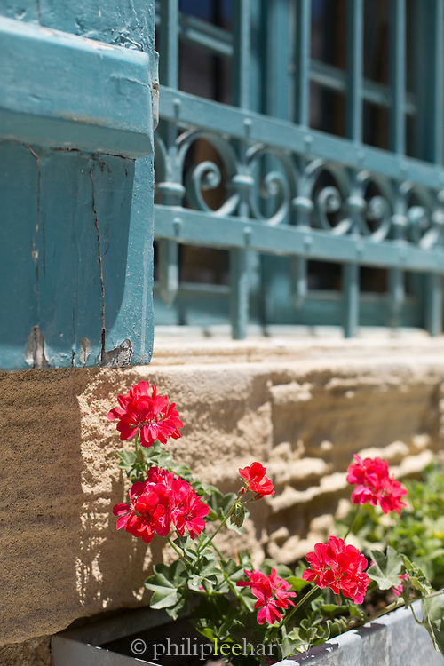 Close-up of potted plant with red flowers hanging under window, Paphos, Cyprus