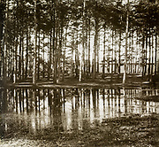 Magic lantern slide of pine trees reflected in water of large puddle, location unknown, circa 1900