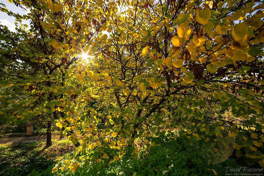Sun breaking through autumn yellowish leaves.