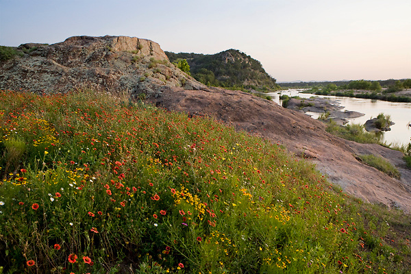 Stock photo of sunset in a field of red and yellow wildflowers along the Llano River in the Texas Hill Country