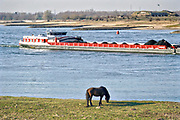 Nederland, Millingen, 27-2-2019Gelderse Poort langs de Rijn, Waal, ter hoogte van Millingen en Pannerdense Kop. Op de achtergrond het fort Pannerden . Een binnenvaartschip beladen met kolen vaart richting Duitsland, een konikpaard staat in de uiterwaarden te grazen .Foto: Flip Franssen