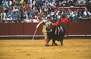 """Bullfighting in Sevilla's famous bullring """"La Real Maestranza"""" is a significant part of the Feria de Abril..The Feria de abril de Sevilla, """"Seville April Fair"""" dates back to 1847. During the 1920s, the feria reached its peak and became the spectacle that it is today. It is held in the Andalusian capital of Seville in Spain. The fair generally begins two weeks after the Semana Santa, Easter Holy Week. The fair officially begins at midnight on Monday, and runs six days, ending on the following Sunday. Each day the fiesta begins with the parade of carriages and riders, at midday, carrying Seville's citizens to the bullring, La Real Maestranza...For the duration of the fair, the fairgrounds and a vast area on the far bank of the Guadalquivir River are covered in rows of casetas (individual decorated marquee tents which are temporarily built on the fairground). Some of these casetas belong to the prominent families of Seville, some to groups of friends, clubs, trade associations or political parties. From around nine at night until six or seven the following morning, at first in the streets and later only within each caseta, crowds of people party and dance Sevillanas, traditional Flamenco dances, Sevillan style drinking Jerez sherry, or Manzanilla wine, and eating tapas. .."""