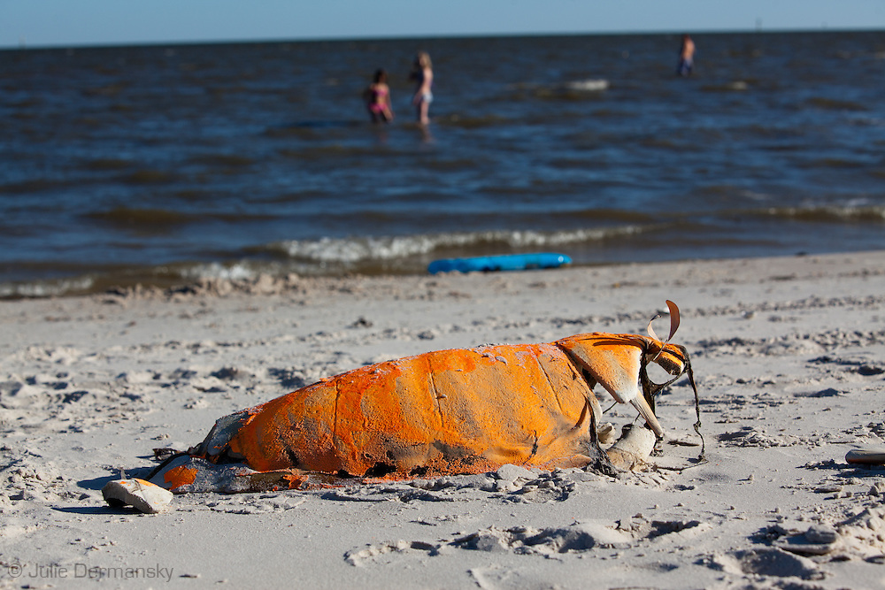 An unprecedented number of dead young  Kemp's Ridley and Loggerhead  sea turtles have washed up on the shores of Mississippi along the Gulf of Mexico starting almost a year after the BP oil spill. <br /> Test are being done on the high number of turtle and dolphin corpses found on the beaches but results have not been released.