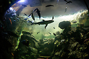 The Strip, Las Vegas, Nevada.The Shark Reef, Mandalay Bay, Las Vegas, Nevada.