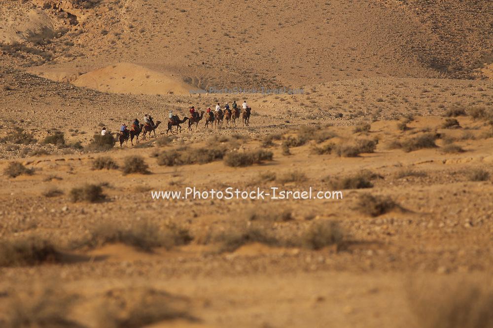 Israel, Negev Desert, a camels' convoy