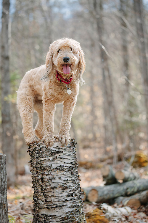 Fuzzy mutt perched on a stump