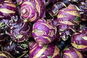 """Delicacy"" purple kohlrabi"
