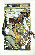 Afro-Americans picking cotton, USA. Postcard c1900.