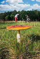 AALDEN - Drentse Golfclub De Gelpenberg . herfst , paddestoel, COPYRIGHT KOEN SUYK