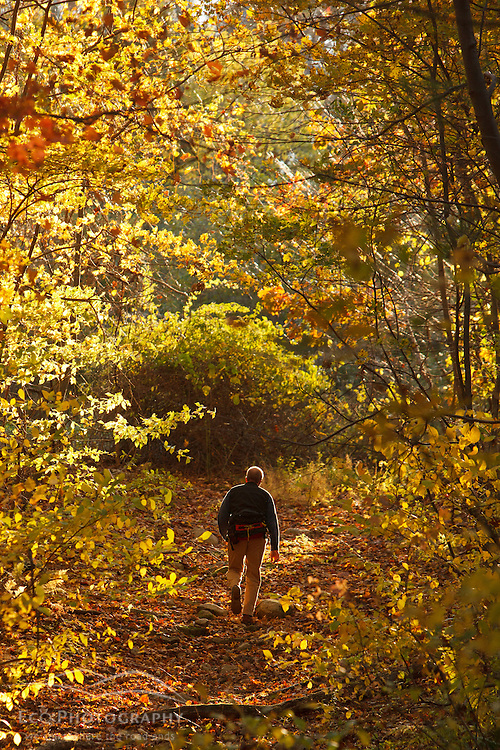 A man walks on a woods road in the forest at Elmwood Farm in Hopkinton, Massachusetts. Fall.