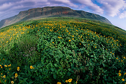 Wildflowers on Approach to Polihale (Fisheye), Kauai, Hawaii, US