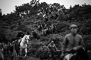"""Throughout Galicia, in northern Spain, is fulfilled the annual ritual of cutting the tails of wild horses that live free in the mountains. But is in the village of Sabucedo that the tradition of """"Rapa das Bestas"""" gains strength as international event with the attendance, every summer, of hundreds of fans and curious of this """"magic party"""".<br /> The origins of the initiative ride until the sixteenth century, even if the uncertainty about their religiosity dissipates between legends, stories of bravery and the delivery of beasts to St. Lawrence for protecting villages against the plague.<br /> After the prayers, """"Rapa das Bestas"""" includes an incursion by the hills to join the wild horses together and the fight that puts men - and women – and animals to measure forces indoors the Curro, that at all resembles a gladiatorial arena. The goal is to let the horses immobilized on the ground for them tails and manes to be cut. Similarities with the handle of bulls in Spanish lands will not be just a coincidence.<br /> Although there are groups against holding of this tradition, against the struggle between wild horses, against the abusive cutting of their tails and manes, the """"party"""" continues, maintaining belief in a ritual that celebrates the strength of the inhabitants of Sabucedo to, for centuries, protect their animals against men, wolves and fireworks.<br /> <br /> Young and old take part in the search and when they feel they have rounded up as many horses as possible, they had back down the mountain to Sabucedo."""
