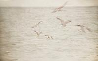 Cape Cod, MA.   ©2016 Karen Bobotas Photographer