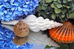 Hydrangea & Shells is an<br /> ode to Cape Cod, Massachusetts.