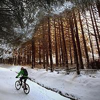 Mountain biking Glentress.Photograph David Cheskin.