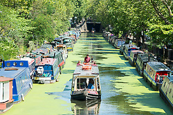 © Licensed to London News Pictures. 29/07/2014. London, UK Boats make their way through the bright green algae that sits on the surface of the canal due to the sunny and hot conditions. People relax in the sunshine at Little Venice on Regent's Canal in North London today 29th July 2014. Photo credit : Stephen Simpson/LNP