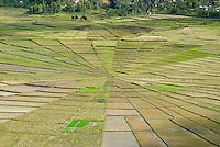 Indonesie. Flores. Region de Ruteng. Rizieres en toile d'araignee. // Indonesia. Flores. Spider's web rice fields around Ruteng.