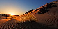 In clear and cold morning, I was there observing the golden rays of the sun which come slowly and shiny on the sand lines.
