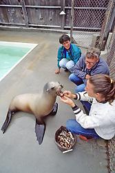 Checking Teeth Of Sea Lion