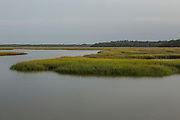 The salt marsh of the Timucuan Ecological <br /> and Historic Preserve provides a habitat for diverse animal and plant life.