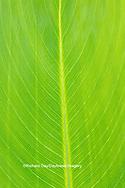 63899-05515 Canna leaf Marion Co. IL