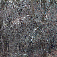 USA, Illinois, Darien. Winter snow and trees in Oldfield Oaks Forest Preserve.