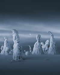 You forget about the intense cold when you stumble upon an otherworldly scene like this from the frozen forests of Riisitunturi, Finnish Lapland - January 2019<br /> <br /> BIO: Stian Klo was born in February 1980 in Harstad, Northern Norway, where he also lives today. He's a father of two, and today he runs Discover North AS (www.lofotentours.com) together with friend, co-founder and business partner Arild Heitmann. Discover North AS is one of the leading tour operators in the arctic/polar parts of the world for pure photography tours/workshops. <br /> <br /> He's been a fulltime and award winning nature and landscape photographer since 2014. His work has been published in highly esteemed magazines such as National Geographic, Lonely Planet Traveller Magazine, TIME Magazine, Die Zeit, Business Insider and several more. His images and articles have also been licensed to international ad-campaigns and product launches for companies such as Apple, Disney, Lonely Planet, Instagram, Nike and BBC to name a few.<br /> <br /> WEBSITE: lofotentours.com<br /> INSTAGRAM: @stianmklo