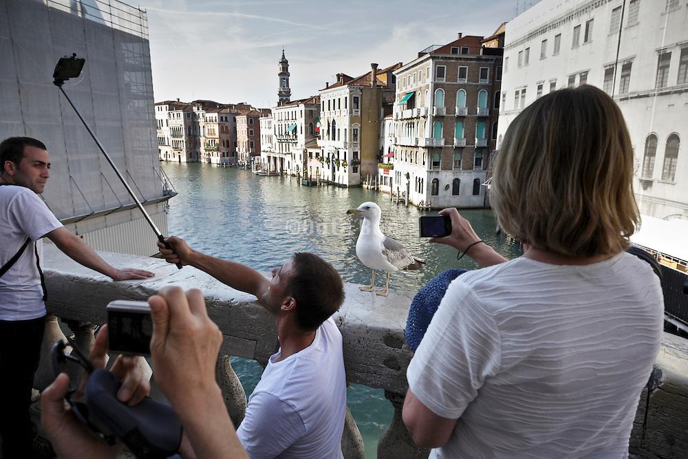 seagull posing for photo on the Rialto bridge Venice Italy