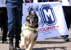 May 1, 2019 - Nairobi, Kenya - A trained dog seen being walked during the celebrations..Kenyans celebrated Labour Day at Uhuru Park in Nairobi where some Youths protested against rampant corruption and poor leadership in Kenya. Unemployment and underemployment is widespread in the country. (Credit Image: © Billy Mutai/SOPA Images via ZUMA Wire)