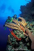 scuba divers on Bloody Bay Wall, Little Cayman Island ( Caribbean Sea )  MR 169   MR 170