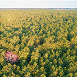 Drone view of forest in Church Creek, Maryland. Spring.