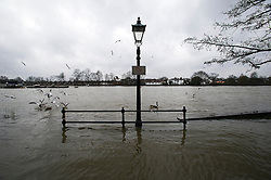 © London News Pictures. 31/01/2014. Flood water covers the Thames Path riverbank at Strand-on-the-Green in Chiswick, West London, where the rRiver Thames has broken it's banks. Photo credit: Ben Cawthra/LNP