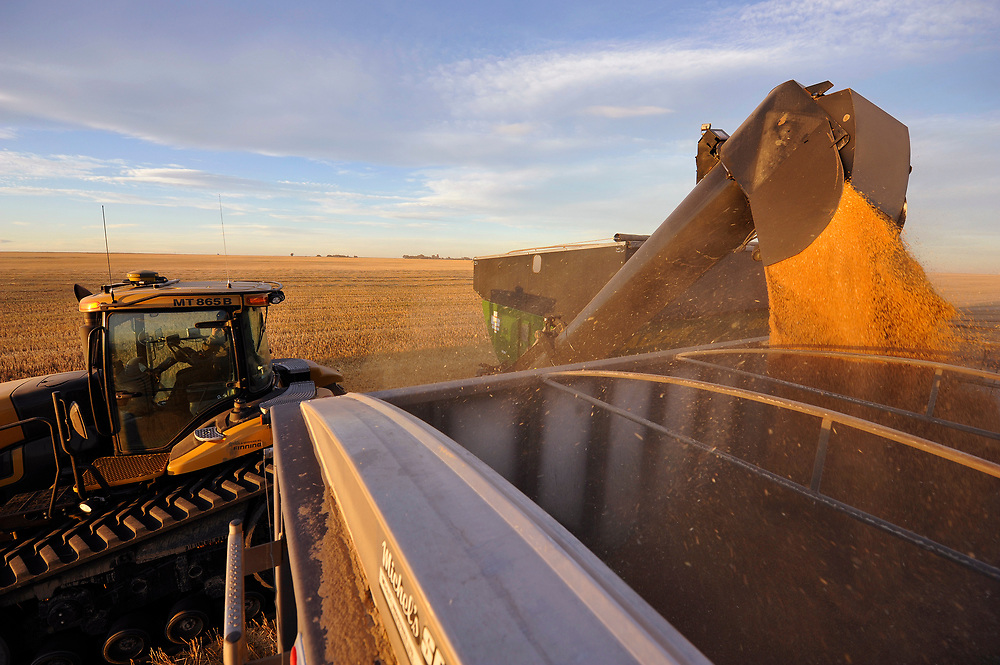 Wheat is dumped into a grain truck for transport on the Stephen and Brian Vandervalk farm near Fort MacLeod, Alberta, September 26, 2011.  REUTERS/Todd Korol (CANADA)