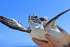 514 Florida Turtles
