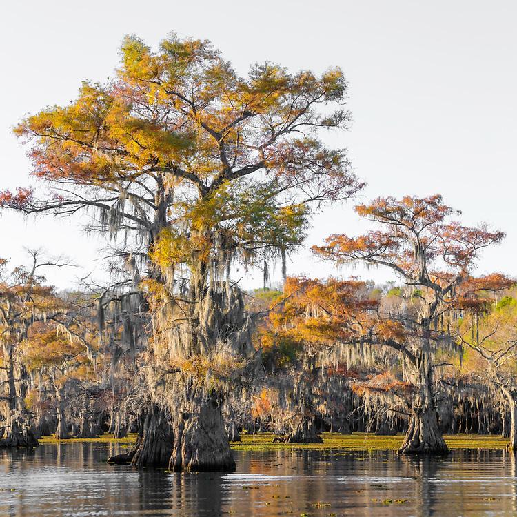 Caddo Lake, Texas, 2020