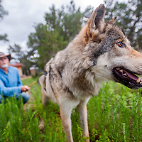 080613       Cable Hoover<br /> <br /> Rory Zoerb and his high-content wolf-dog Zoerro pause during their daily hike outside of the Wild Spirit Wolf Sanctuary in Candy Kitchen Tuesday.