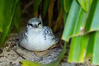 Nesting Bird in Seychelles