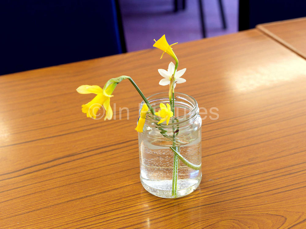 Different varieties of small narcissi in a jam jar of water on a table at The Northern Group of the Daffodil Society Show and competition at Pilley Community Centre, South Yorkshire.
