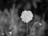 http://Duncan.co/heart-shaped-flower