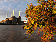 Autumn leaves on the London plane trees opposite Battersea Power Station